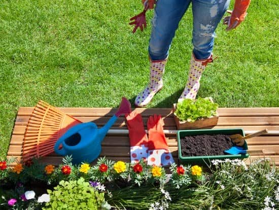 Gardening Secrets And Tips To Beautify Your Homes
